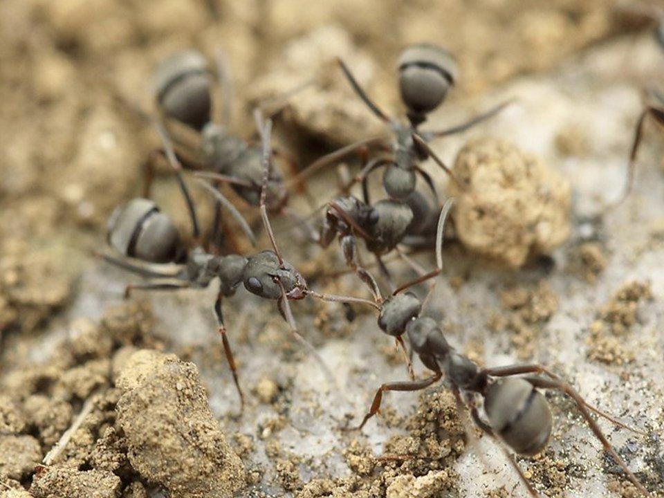 Ant Control 1
