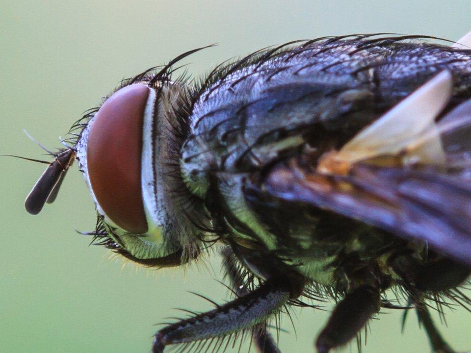 Fly Treatment 3