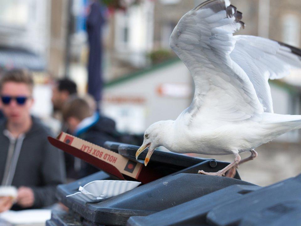 Gull Control 2
