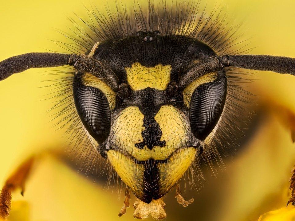 Wasp Control 1