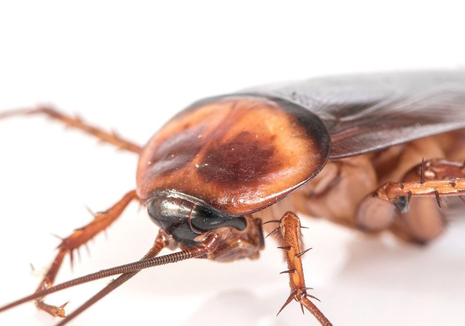 Cockroach Control 2