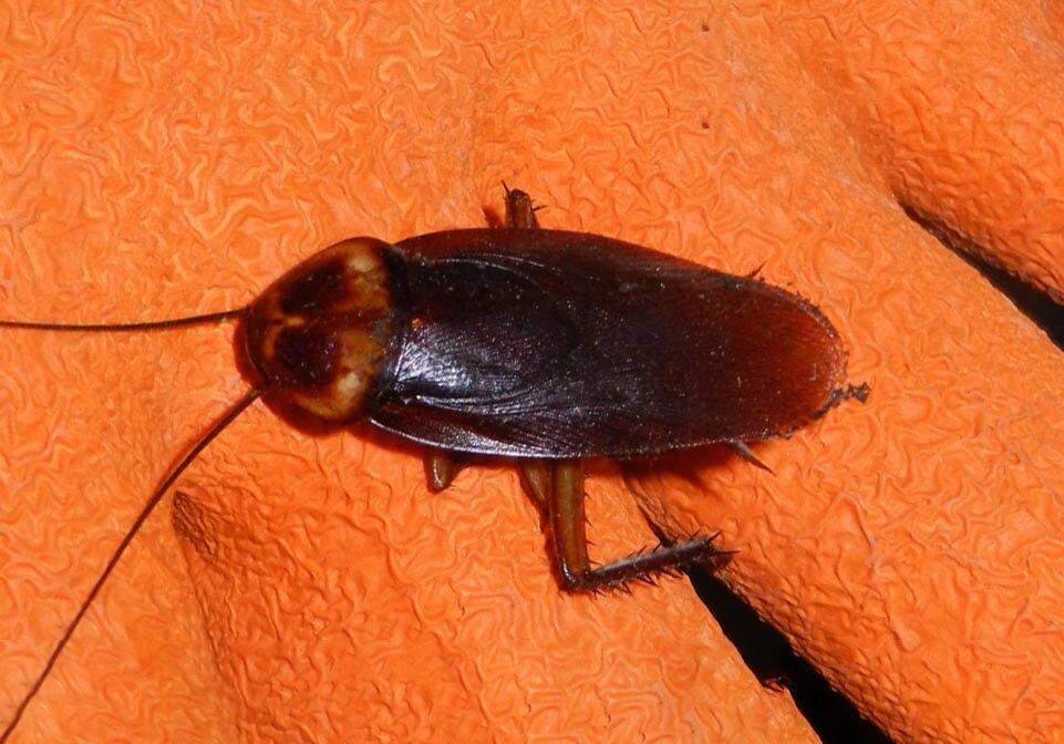 Cockroach Control 3