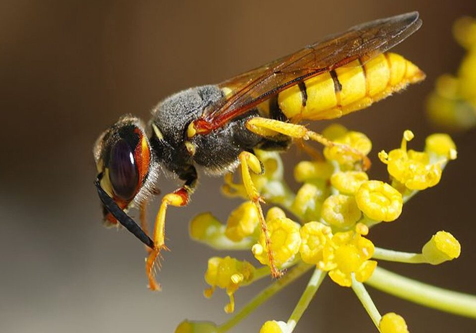 Wasp Control 3